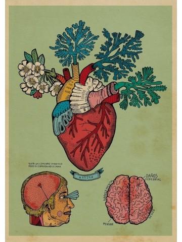 Lámina Corazón - Asis Percales